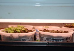 Sowing Indoor Seeds